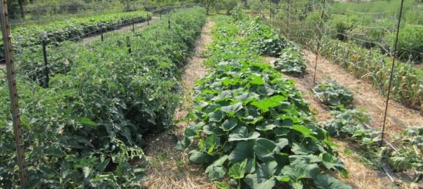 polykultúrna zahrada